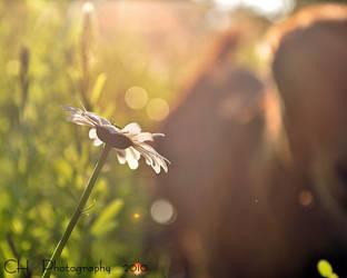 Summertime by Da-Cha-Cha