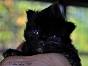 Mohawk kitty by Da-Cha-Cha
