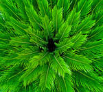 Patterns in nature by H6RM