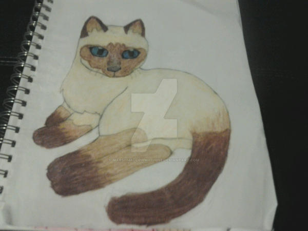 Siamese Cat Doodle by MarshMallowMachine