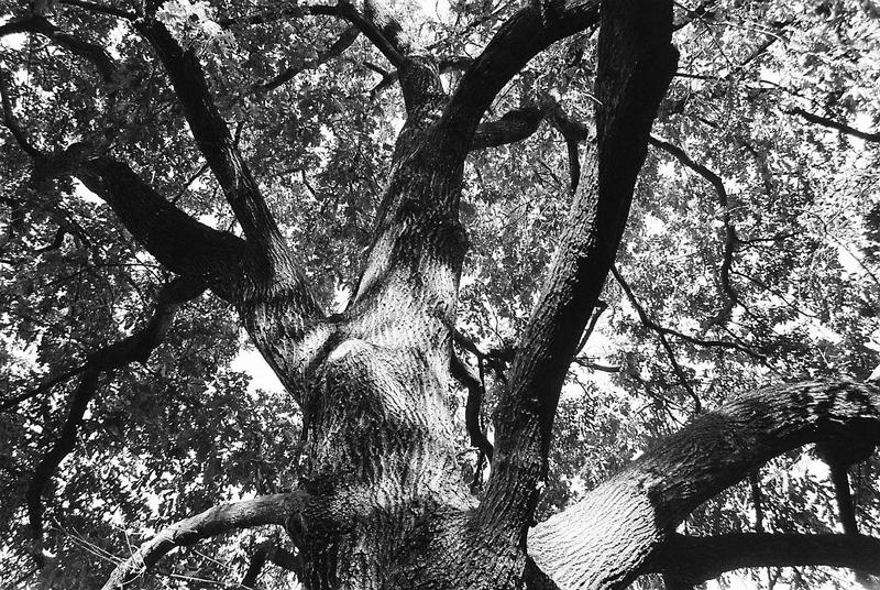 Tree by jorgeluis