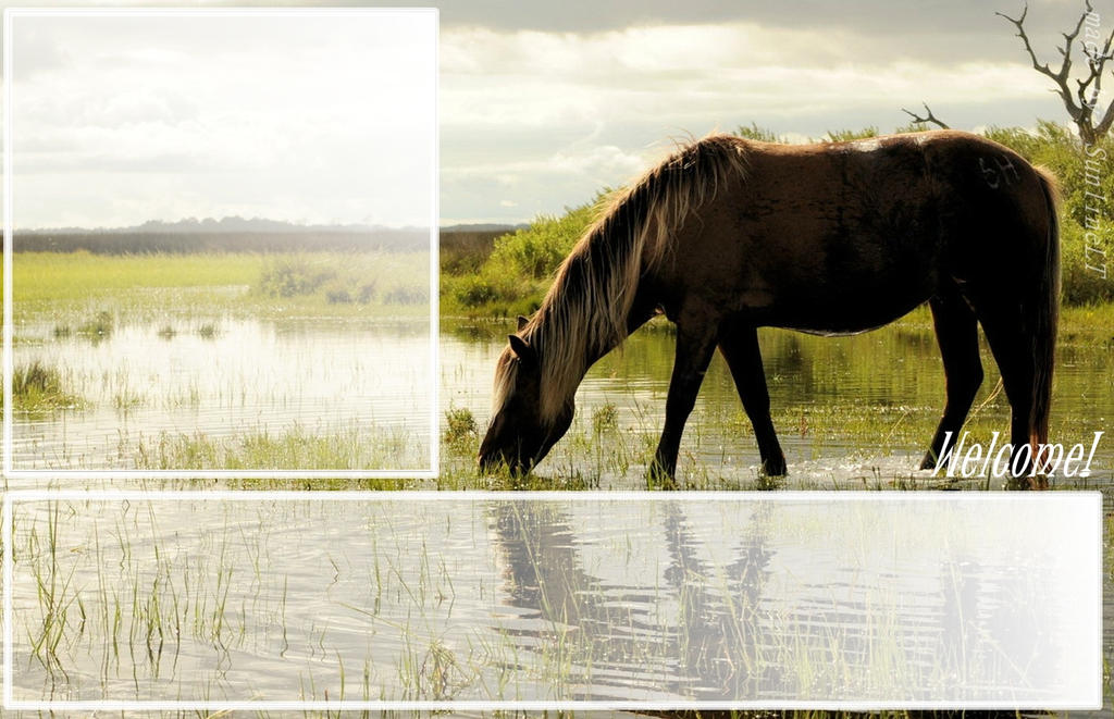 Howrse layout! by TikiKaro Images - Frompo  Layout