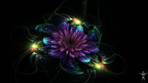 Tiempo de flores