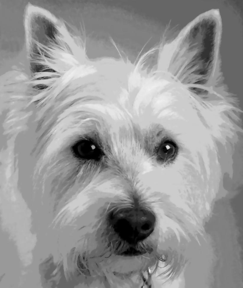 Westie Higland Terrier Dog Paint By Number Art Kit By