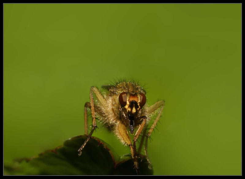 Insect by davidbridges