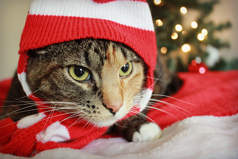 Christmas: Meow! by MariaFeliciano