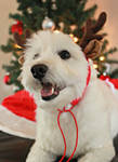 Christmas: Woof! by MariaFeliciano