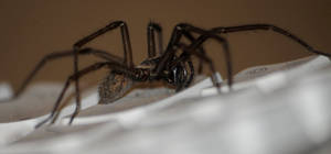 Spider on keyboard by Picturebeast