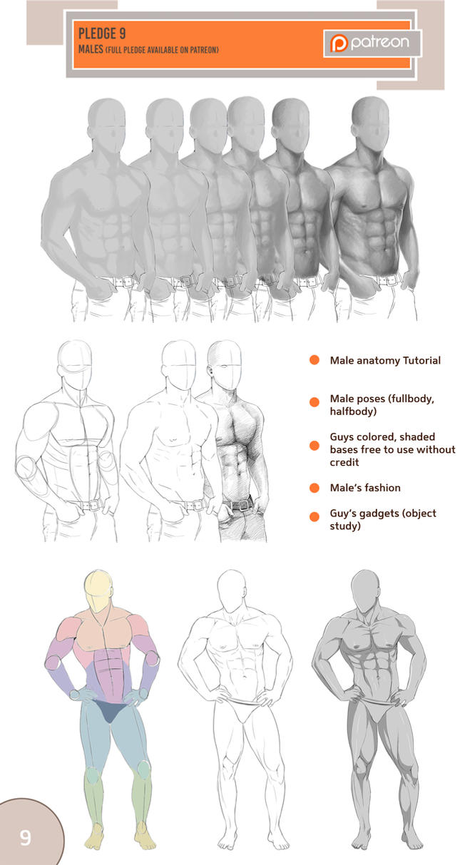 Male anatomy by Precia-T on DeviantArt