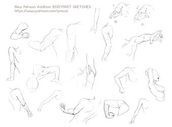 Bodyparts sketches - new patreon addition by Precia-T