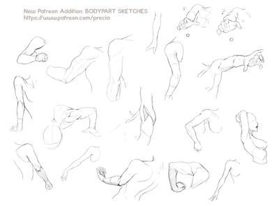 Bodyparts sketches - new patreon addition by Precia-T