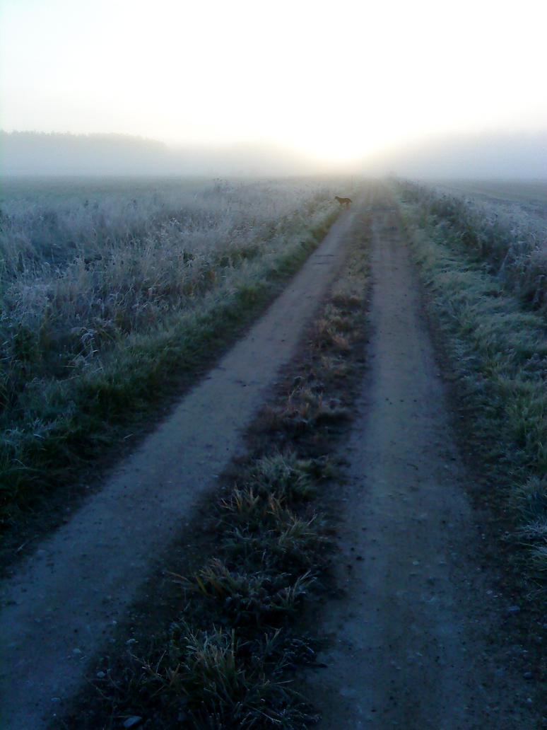 Dog in Morning Mist by ShadrakhYehochanan