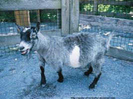 Zoo - Fat goat by NickACJones