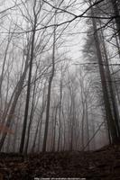 Misty forest trail by NickACJones