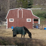 YCH - Horse and barn