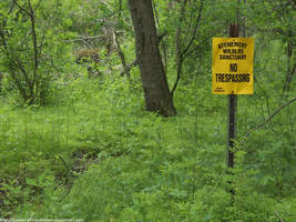 Atonement Wildlife Sanctuary by NickACJones