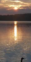 Sunset goose by NickACJones