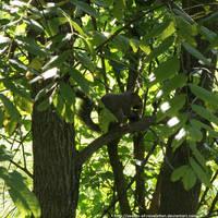 Hungry squirrel by NickACJones