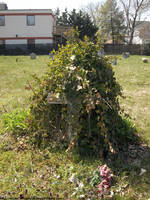 Ivy-obscured cross by NickACJones