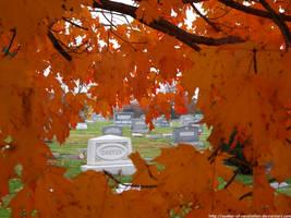 Through maple by NickACJones