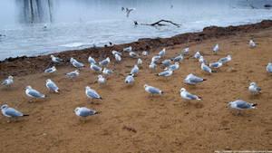 A Flock of Seagulls by NickACJones