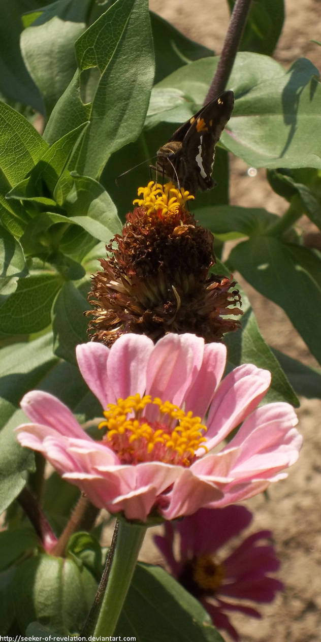 Pollinator by NickACJones