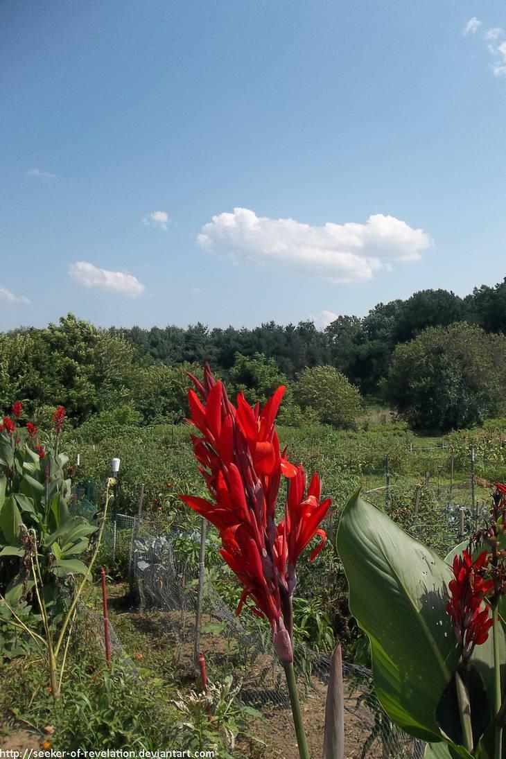 Summer garden by NickACJones