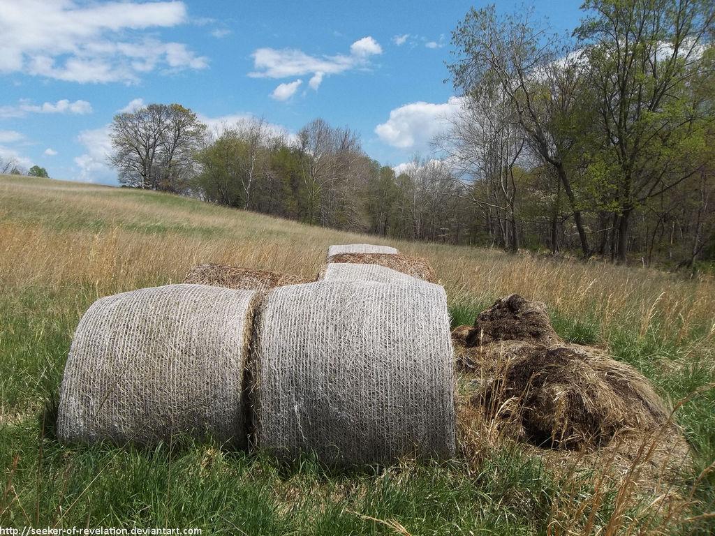 Hay bales by NickACJones