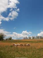 Abandoned field by NickACJones