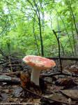 Summer mushroom by NickACJones