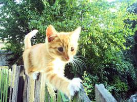Little kitten on the way 3 by Alexiel99