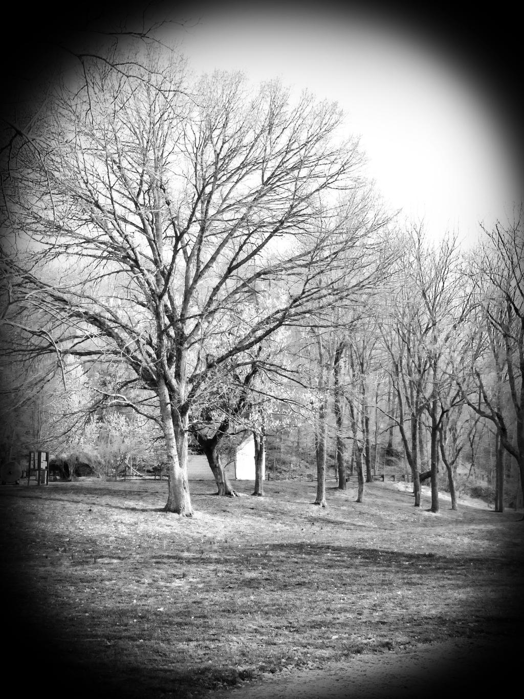 A Little Grey by KatieMarieeBowser