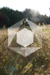 Grafik Logo by Annamalie
