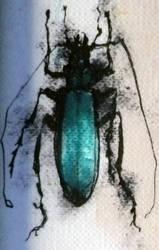 bug ll