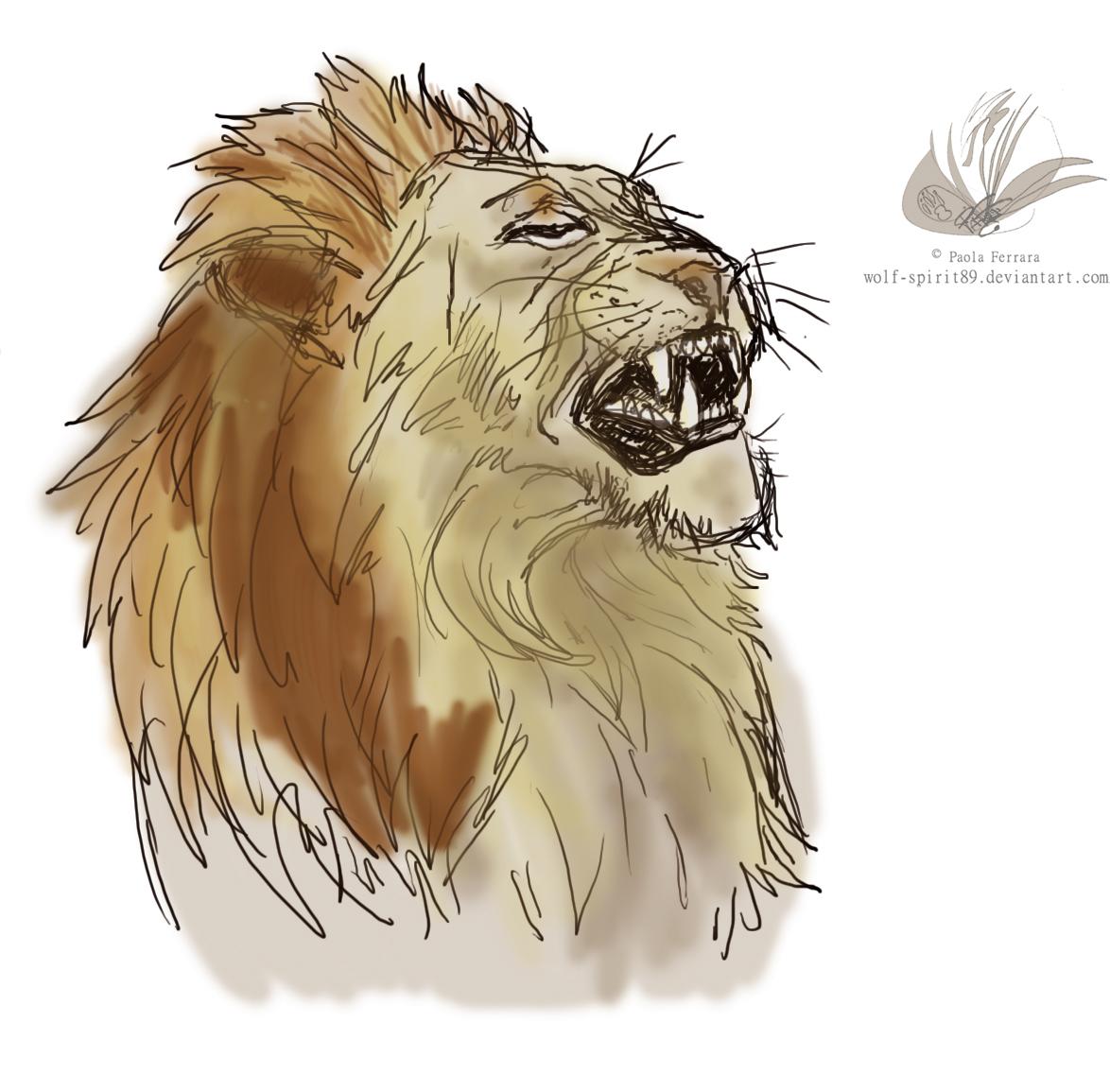 Lion Sketch By Wolf-Spirit89 On DeviantArt