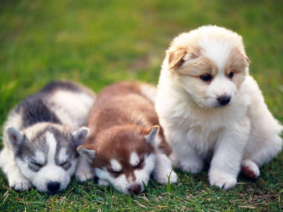 PuppyDog by golzarrahman