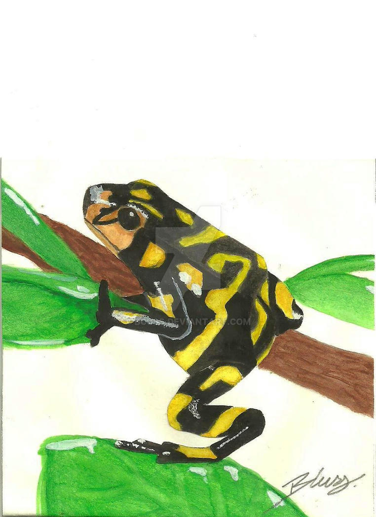 how to draw a poison arrow frog