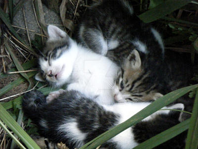 Sleeping Cat 7 by ArtMessenger-J