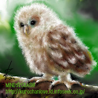Owl by okaryu