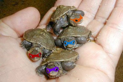 TMNT by SweetlySouthern