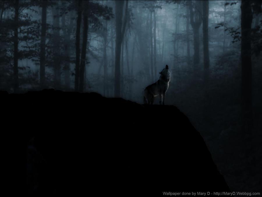 Lone Wolf Misty Woods Wallpaper By Surfsupnet