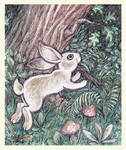 Jumping hare