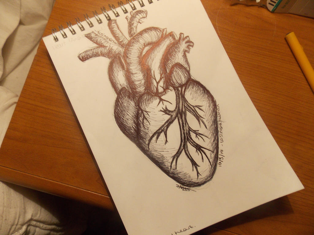 Anatomical Heart Tattoo Drawing By Tosinthehuman On Deviantart