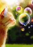 curiosity burst the bubble