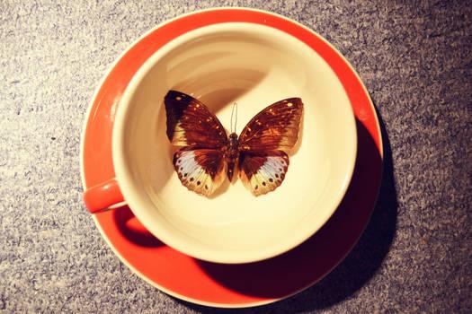 la arciduca farfalla