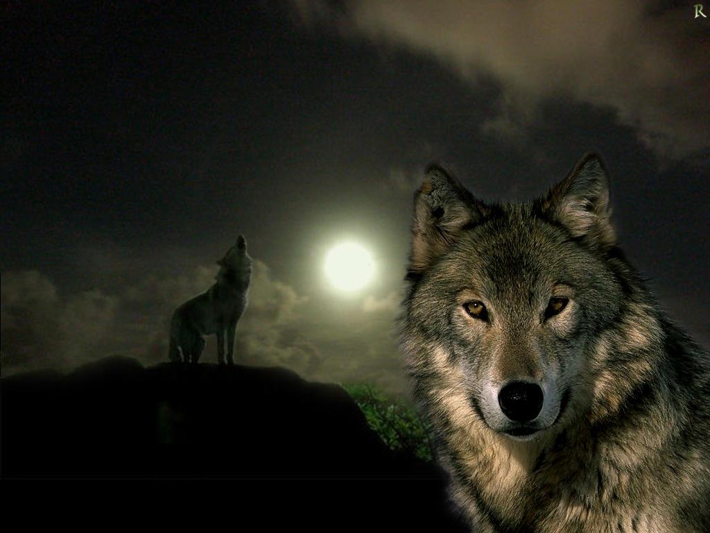 волки в красивых рамках фото