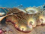 Delicate Coral