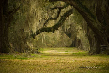 Old Oaks and Moss by Bryanb9318