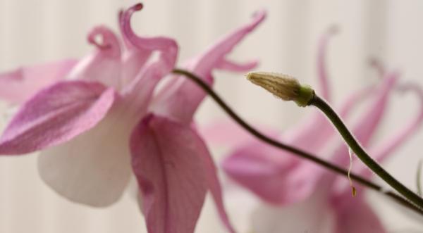 Pink by Kuallo