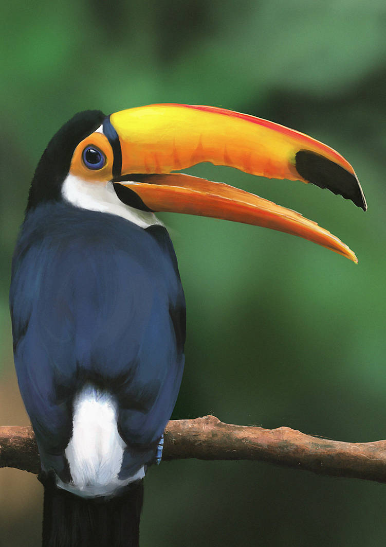 Toucan|Study by N-Deed